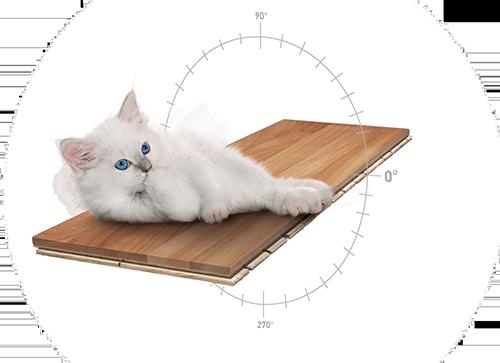 Bild Katze